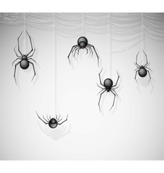 The spiders vector image