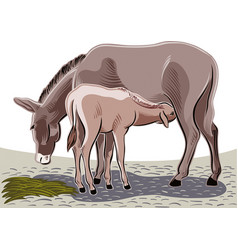 Donkey suckling her puppy vector