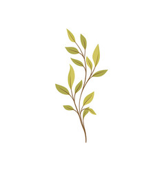 Nature and plants trees and shrubs flora concept vector
