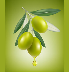 olive drop natural branch with splashes of vector image