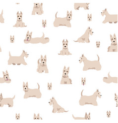 Scottish terrier dogs in different poses and coat vector