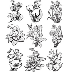 Set sketches flowers vector