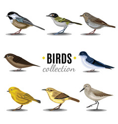 birds collection sandpiperswallowtrush vauxs-swift vector image vector image