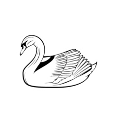 swan icon isolated on background vector image