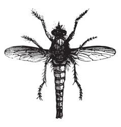 Fly killer vintage vector