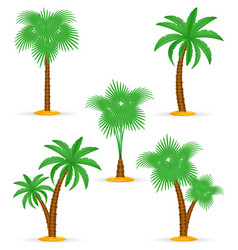 palm tree tropical stock vector image