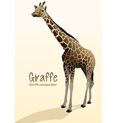 Realistic giraffe standing with shadow vector