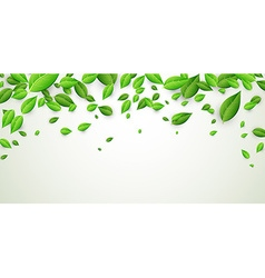 Banner with green leaves vector image