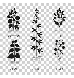 Cotton ramie kenaf jude and flax plants with vector