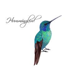 hummingbird realistic vector image