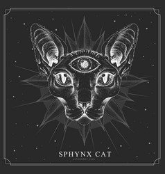Modern magic witchcraft card with sphynx cat vector