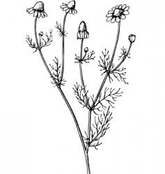 plant matric aria vector image