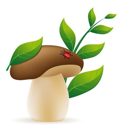 mushroom cep vector image vector image