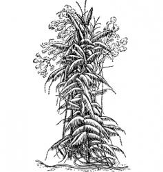 plant calamus vector image vector image