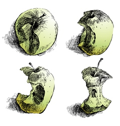 Apple sketches vector