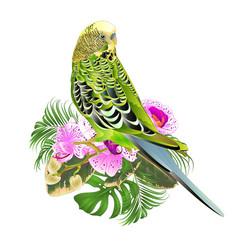 Budgerigar green pets parakeet on a bouquet vector