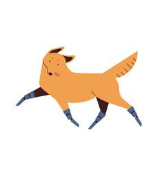dog with prosthetics legs flat vector image