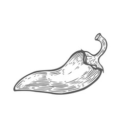 Hand drawn chilly pepper vector