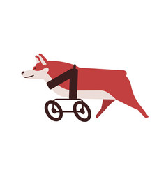 Dog with wheel chair flat vector