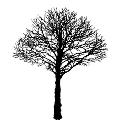 Image of black urban tree contour - linden vector