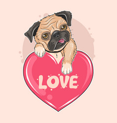 pug dog valentine puppy artwork vector image