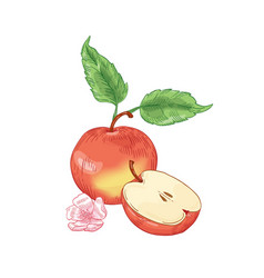 Red apple hand drawn whole vector