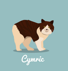 cymric cat on sky blue background vector image