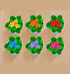 top view collection of flowers in pot vector image