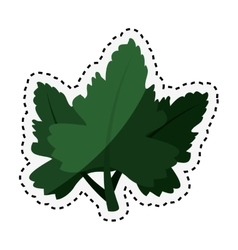 coriander leaves ingredient isolated icon vector image