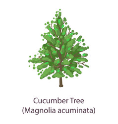 cucumber tree icon flat style vector image