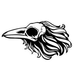 dead bird skull with feathers vector image