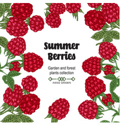 hand drawn background with summer berries vector image