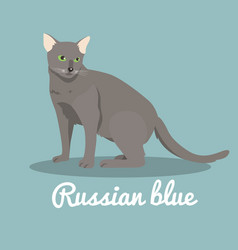 Russian blue cat on sky blue background vector
