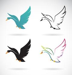 Swan vector image