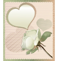 White rose and heart vector image
