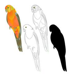 Bird tropical parrot sun conure natural vector