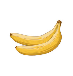hand drawn sketch banana in color isolated on vector image