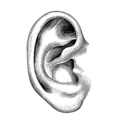 human ear hand draw vintage clip art isolated on vector image