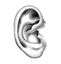 Human ear hand draw vintage clip art isolated vector