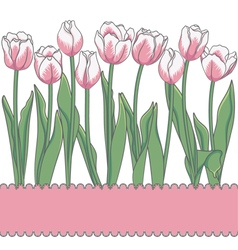 Card with tulips and place for an inscription vector