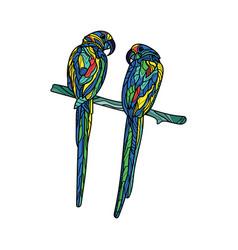 colorful parrots vector image