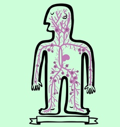 human lymphatic system vector image