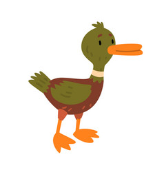 male mallard duck cute funny duckling cartoon vector image