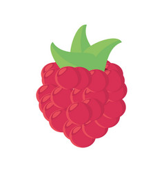 raspberry fruit food healthy vector image