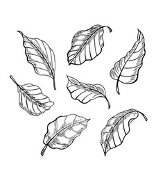 the leaves of the sketch set hand drawn vector image