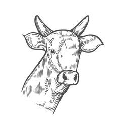 hand drawn cows head vector image vector image