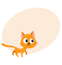 cute and funny red cat character curious playful vector image vector image
