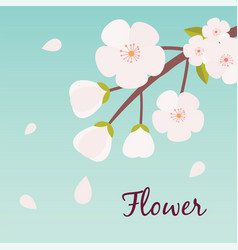 flower sakura flying blue background image vector image