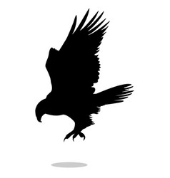 hawk eagle falcon bird black silhouette animal vector image