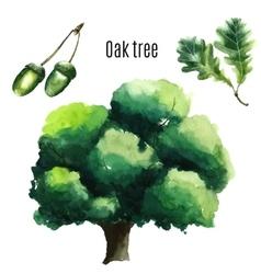 Oak Tree watercolor vector image